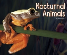 Nocturnal Animals, Paperback Book