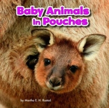 Baby Animals in Pouches, Paperback / softback Book