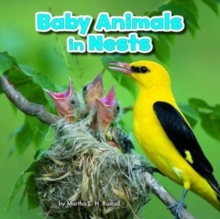 Baby Animals in Nests, Paperback / softback Book