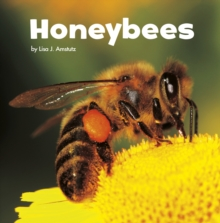 Honeybees, Hardback Book