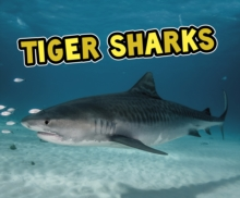 Tiger Sharks, Paperback / softback Book