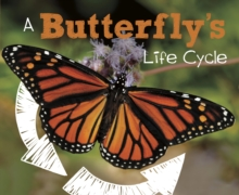 A Butterfly's Life Cycle, Hardback Book