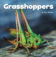 Grasshoppers, Paperback / softback Book