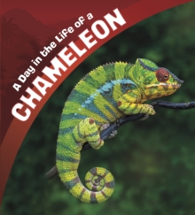 A Day in the Life of a Chameleon, Hardback Book
