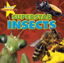 Insect Superstars, Hardback Book
