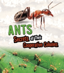 Ants : Secrets of Their Cooperative Colonies, Hardback Book