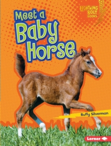 Meet a Baby Horse, EPUB eBook