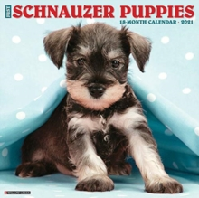 Just Schnauzer Puppies 2021 Wall Calendar (Dog Breed Calendar), Calendar Book