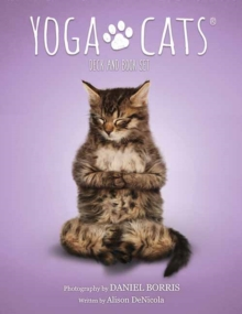 Yoga Cats Deck and Book Set, Cards Book