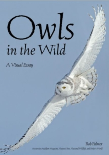 Owls In The Wild : A Visual Essay, Paperback Book