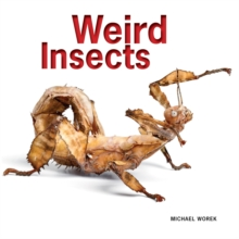 Weird Insects, Paperback Book