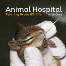 Animal Hospital : Rescuing Urban Wildlife, Paperback Book