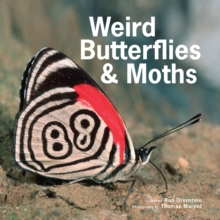 Weird Butterflies & Moths, Paperback / softback Book