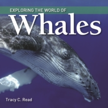 Exploring the World of Whales, Paperback Book