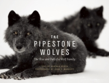 The Pipestone Wolves : The Rise and Fall of a Wolf Family, Hardback Book