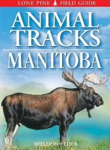 Animal Tracks of Manitoba, Paperback / softback Book