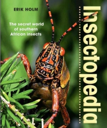 Insectopedia : The Secret World of Southern African Insects, Paperback Book