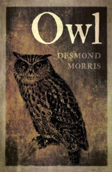 Owl, Paperback Book