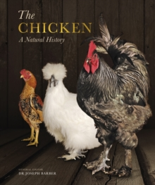 The Chicken : A Natural History, Paperback / softback Book