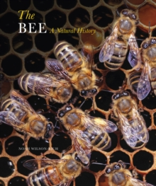 The Bee : A Natural History, Paperback Book