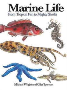Marine Life : From Tropical Fish to Mighty Sharks, Paperback Book