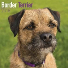 Border Terrier Calendar 2018, Paperback Book