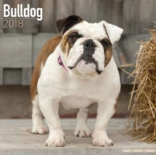 Bulldog, Calendar Book