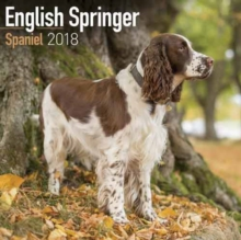 English Springer Spaniel Calendar 2018, Paperback Book
