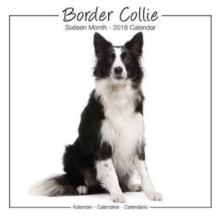 Border Collie Studio Calendar 2018, Paperback Book