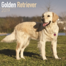 Golden Retriever Calendar 2019, Paperback Book
