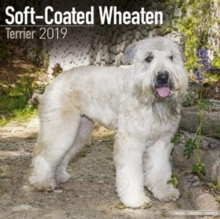 Soft Coated Wheaten Terrier Calendar 2019, Paperback Book