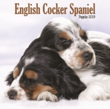 English Cocker Spaniel Puppies M 2019, Paperback Book