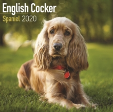 English Cocker Spaniel Calendar 2020, Paperback / softback Book
