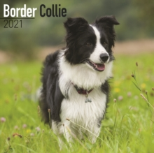 Border Collie 2021 Wall Calendar, Calendar Book