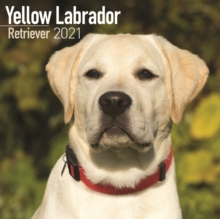 Yellow Labrador Retriever 2021 Wall Calendar, Calendar Book