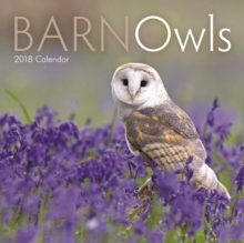 Barn Owls M, Paperback Book