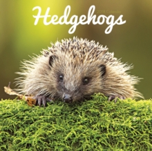 Hedgehogs W, Paperback Book