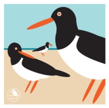 I Like Birds: Oyster Catcher Boxed Notecards, Other printed item Book