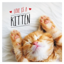 Love is a Kitten : A Cat-Tastic Celebration of the World's Cutest Kittens, Hardback Book