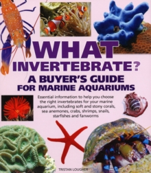 What Invertebrate?, Paperback Book