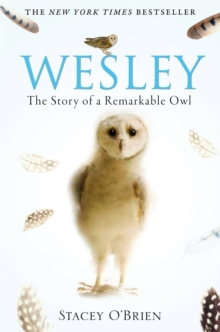 Wesley : The Story of a Remarkable Owl, Paperback Book
