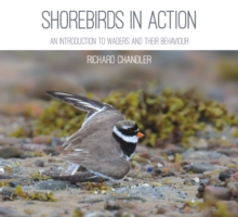Shorebirds in Action : An Introduction to Waders and Their Behaviour, Paperback Book