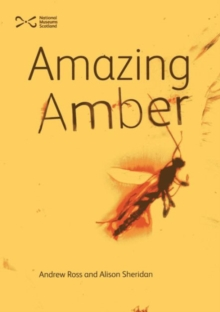 Amazing Amber, Paperback Book