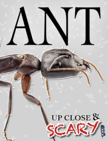 Up Close & Scary Ant, Paperback Book