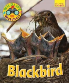 Wildlife Watchers: Blackbird, Paperback Book