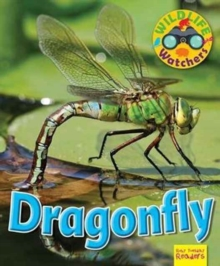 Wildlife Watchers: Dragonfly, Paperback Book