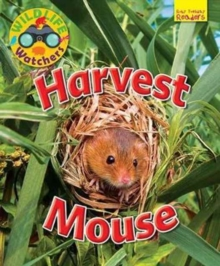 Wildlife Watchers: Harvest Mouse, Paperback / softback Book