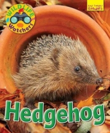 Wildlife Watchers: Hedgehog, Paperback Book
