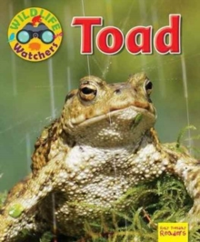 Wildlife Watchers: Toad, Paperback / softback Book