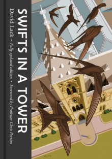 Swifts in a Tower, Hardback Book